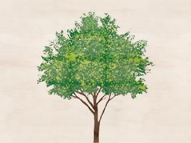 三重の木で建てる安心の有料木造住宅